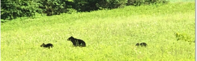 Sandwich Mountain Sanctuary Bear Family